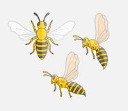 Hornet Insect. Comic Hornet Insects Vector Illustration stock illustration