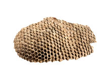 Hornet nest Stock Images