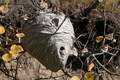 Hornet Nest Stock Photography