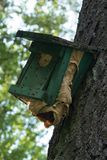 Hornet wasp Net inside of a Birds House Royalty Free Stock Photos