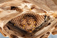 Free Hornet Nest Under A Roof Stock Photo - 211582720
