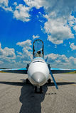 Hornet nose stock images