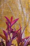 Hornet på den trädgårds- tabellen smyckade miljön Royaltyfria Bilder