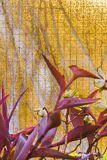 Hornet på den trädgårds- tabellen smyckade miljön Arkivbilder