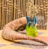Hornet på den trädgårds- tabellen smyckade miljön Royaltyfria Foton