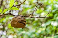 Hornet S Nest Stock Photography