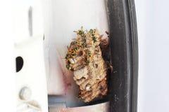 Hornet& x27; s nest Stock Afbeeldingen