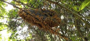 Hornet's Nest royalty free stock image