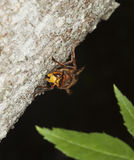 Hornet sitting on tree. Royalty Free Stock Photography