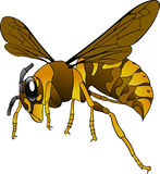 Hornet, Wasp, Insect, Bee, Brown Stock Image