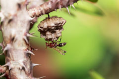 Hornet, or wasp on the nest, close up, hanging on the tree. Stock Images
