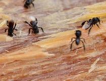 Hornet on wood Stock Image