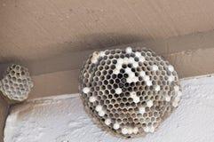 hornets φωλιά Στοκ εικόνα με δικαίωμα ελεύθερης χρήσης