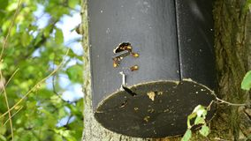 Hornets in a bird house stock video footage