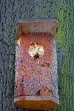 Hornets` nest in a bird box. stock image