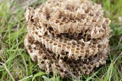 Hornets' nest Stock Image