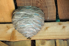 Hornets' Nest and Two Hornets Royalty Free Stock Image