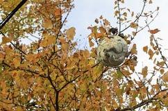 Hornets nest Stock Image