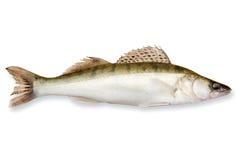 Hornhautflecke der frischen Fische Stockbild