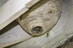 nest der hornisse lizenzfreies stockbild bild 29065396. Black Bedroom Furniture Sets. Home Design Ideas