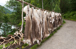 Horns and furs of reindeers, Norway. Horns and furs of reindeers for sale, Norway Stock Photo