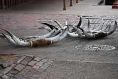 Horns on the sidewalk at the Fort Worth Stock Yards. Horns on the sidewalk at the Fort Worth Stock Yards in Texas. These where unloaded onto the sidewalk the royalty free stock image