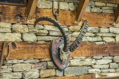 A horns on the skull of a goat on the wall royalty free stock image