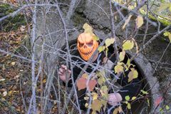 Horrible creature in the autumn forest in the evening. Happy Halloween. Pumpkinhead. A man with a pumpkin on his head climbs out of the pipe stock photography