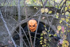 Horrible creature in the autumn forest in the evening. Happy Halloween. Pumpkinhead. A man with a pumpkin on his head climbs out of the pipe royalty free stock photo