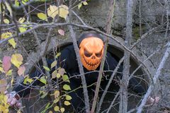 Horrible creature in the autumn forest in the evening. Happy Halloween. Pumpkinhead. A man with a pumpkin on his head climbs out of the pipe stock images