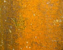 Horrible orange rotting decay wood bark texture stain Royalty Free Stock Images