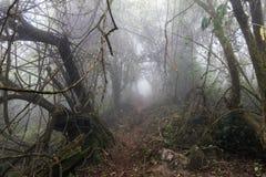 Horror ścieżka w lesie zdjęcie royalty free