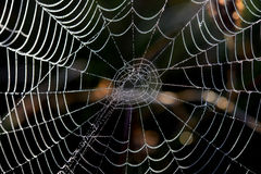 Horror cobweb, isolated on  background Royalty Free Stock Image