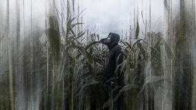 A horror concept of a scary hooded man standing in a field of corn wearing a plague doctor mask looking at the sky. With a grunge