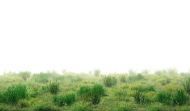 Horror concept. Thick fog in the grass field. 3d illustration Stock Images