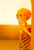 Horror, cruelty, death concept :human skulls leave on the wall w. Ith the sun light effect royalty free stock images