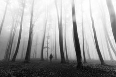 Horror dark man in silhouette in foggy forest Royalty Free Stock Photos