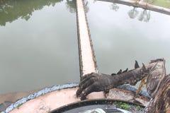 Horror del parque del agua Imagenes de archivo
