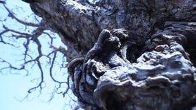 Horror effect shot of tree stock video