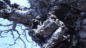 Horror effect shot of tree stock video footage