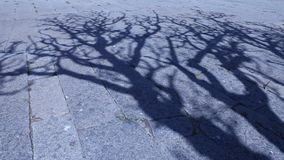 Horror effect shot of tree shadow. Night Horror effect shot of tree shadow stock video footage