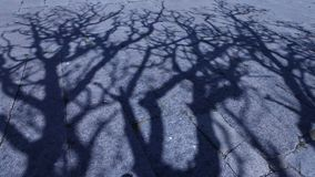 Horror effect shot of tree shadow. Night Horror effect shot of tree shadow stock video