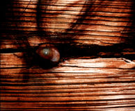 Horror eye Cd Cover Art. Photomanipulation of an eye and a wood board Royalty Free Stock Image