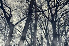Free Horror Foggy Trees Silhouettes Wallpaper. Halloween Mystery Woodland With Mysterious Fog. Spooky Scenery With Misty Shadow. Moody Stock Photography - 191442662