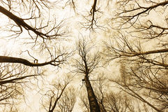 Horror forest with directly below persective Royalty Free Stock Images