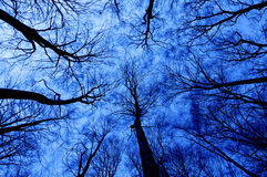 Horror forest at night Stock Photography