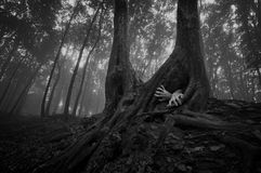 Horror forest scene with hands on halloween. Horror scene with hands coming out of tree in a dark forest with fog on halloween royalty free stock images