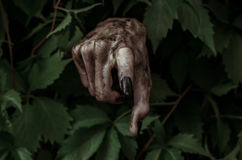 Horror and Halloween theme: terrible dirty hand with black fingernails zombie crawls out of green leaves, walking dead apocalypse. Studio Stock Images