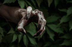 Horror and Halloween theme: terrible dirty hand with black fingernails zombie crawls out of green leaves, walking dead apocalypse Royalty Free Stock Image