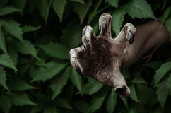 Horror and Halloween theme: terrible dirty hand with black fingernails zombie crawls out of green leaves, walking dead apocalypse Stock Photography